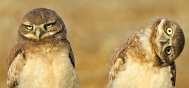 Image that provides a visual metaphor about how different owls see things differently